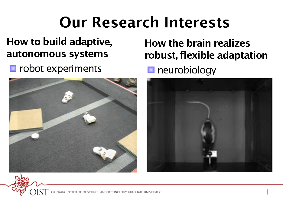 Slide: Our Research Interests How to build adaptive, autonomous systems !  robot experiments How the brain realizes robust, flexible adaptation !  neurobiology