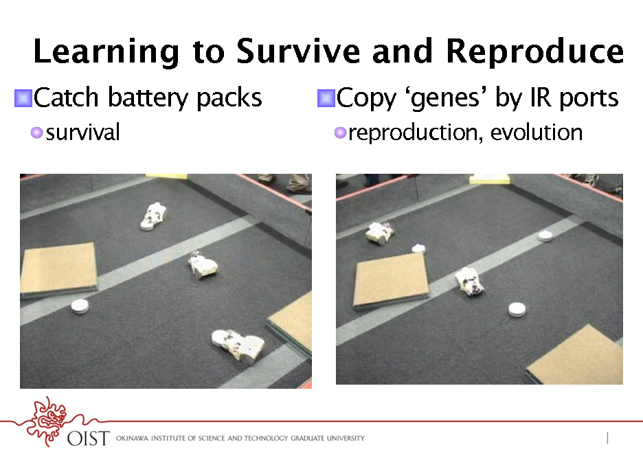 Slide: Learning to Survive and Reproduce ! Catch battery packs ! survival  ! Copy genes by IR ports ! reproduction, evolution