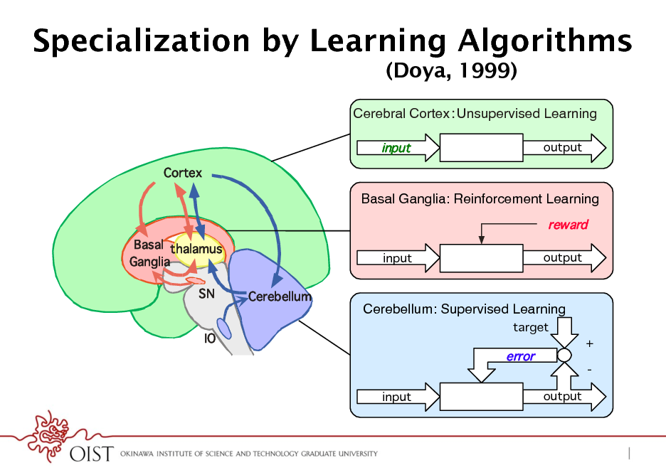 Slide: Specialization by Learning Algorithms (Doya, 1999) Cerebral CortexUnsupervised Learning! input Cortex output  Basal Ganglia: Reinforcement Learning! reward Basal thalamus Ganglia SN Cerebellum input output  Cerebellum: Supervised Learning! target  IO  error input output  + -