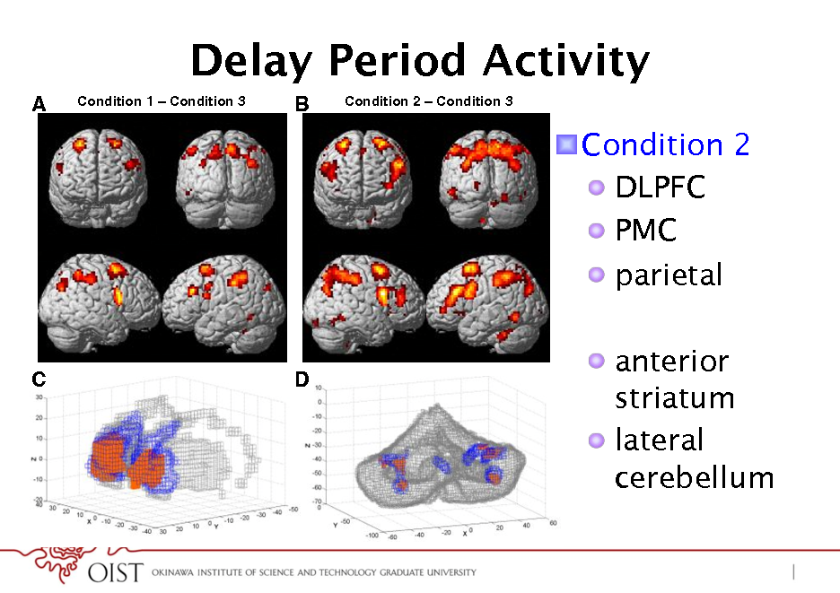 Slide: Delay Period Activity A Condition 1 Condition 3  B  Condition 2  Condition 3  ! Condition 2 !  DLPFC !  PMC !  parietal !  anterior striatum !  lateral cerebellum  C  D