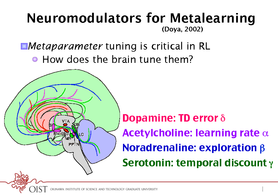 Slide: Neuromodulators for Metalearning (Doya, 2002)  ! Metaparameter tuning is critical in RL !  How does the brain tune them?  Dopamine: TD error ! Acetylcholine: learning rate ! Noradrenaline: exploration  Serotonin: temporal discount !