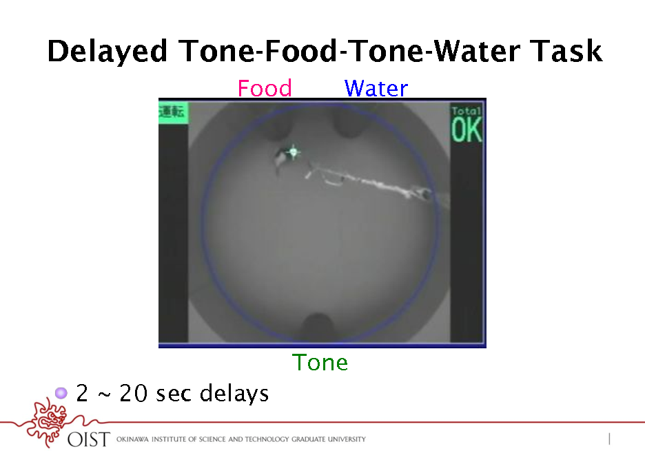 Slide: Delayed Tone-Food-Tone-Water Task Food Water  Tone !  2 ~ 20 sec delays