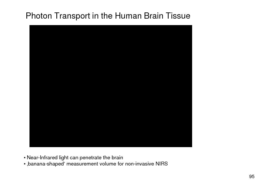 Slide: Photon Transport in the Human Brain Tissue   Near-Infrared light can penetrate the brain  banana-shaped measurement volume for non-invasive NIRS 95