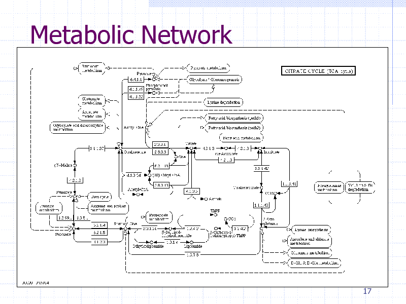 Slide: Metabolic Network  17