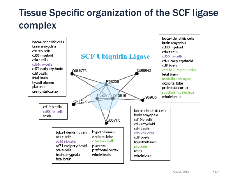 Slide: Tissue Specific organization of the SCF ligase complex  29/08/2012  114