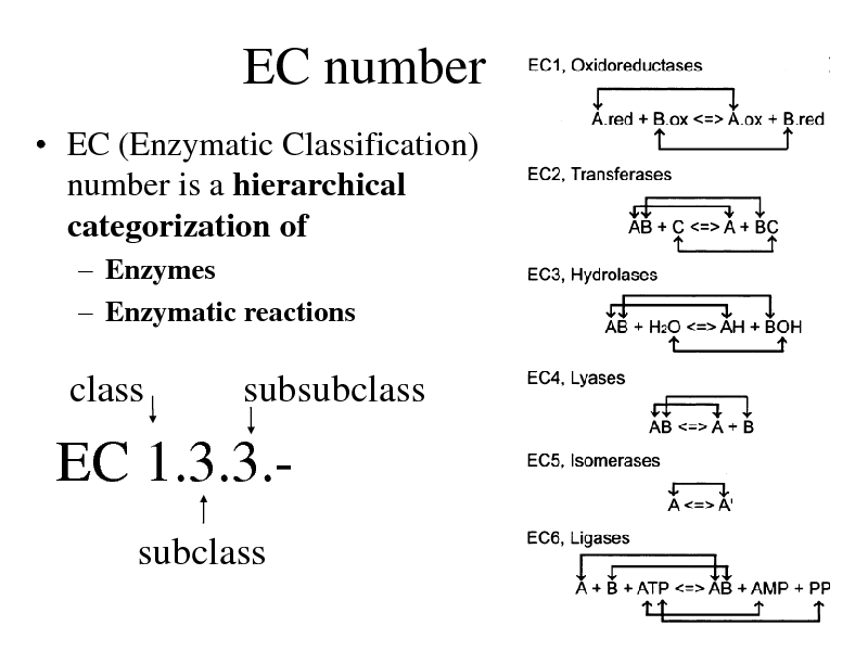 Slide: EC number  EC (Enzymatic Classification) number is a hierarchical categorization of  Enzymes  Enzymatic reactions  class  subsubclass  EC 1.3.3.subclass