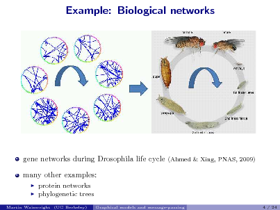 Slide: Example: Biological networks  gene networks during Drosophila life cycle many other examples:    (Ahmed & Xing, PNAS, 2009)  protein networks phylogenetic trees Graphical models and message-passing 4 / 24  Martin Wainwright (UC Berkeley)