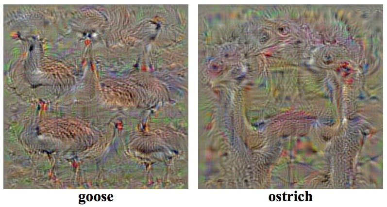 Goose and ostrich